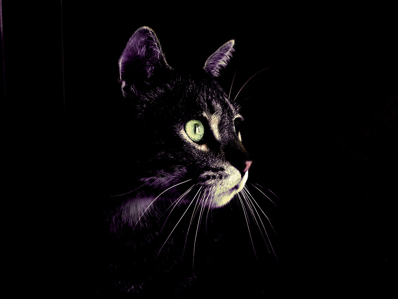 cat-2575913_1280